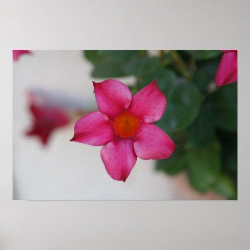 Flor rosada en Pisa Poster