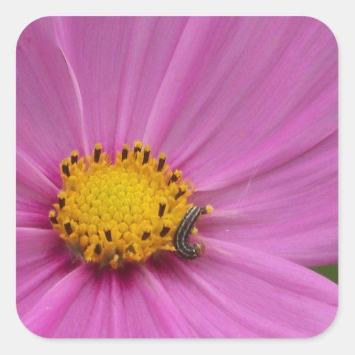 Flor rosada en una tarjeta o un regalo calcomanías cuadradass