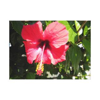 Flor rosada griega griega de la lona hermosa grand lienzo envuelto para galerias