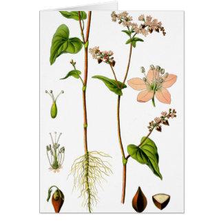 Flor rosada herbaria tarjeta de felicitación
