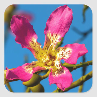 Flor rosada hermosa del árbol de kapoc