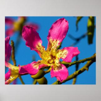 Flor rosada hermosa del árbol de kapoc poster