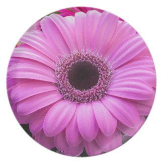 Flor rosada hermosa del gerbera plato para fiesta