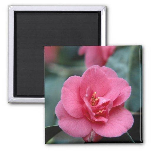 Flor rosada hermosa imán para frigorifico
