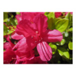 Flor rosada impresiones