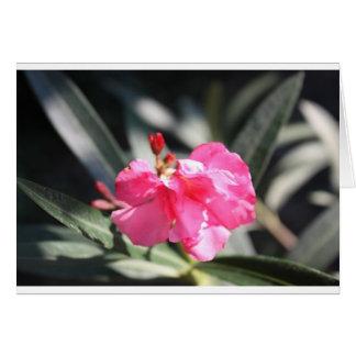 Flor rosada Italia Tarjeta