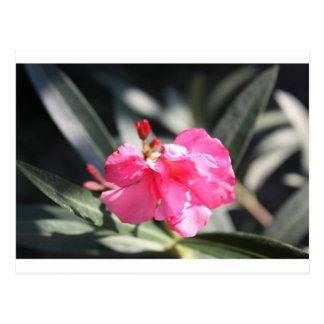 Flor rosada Italia Tarjeta Postal