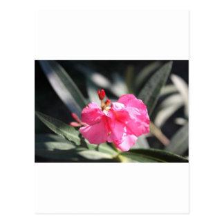 Flor rosada Italia Tarjetas Postales