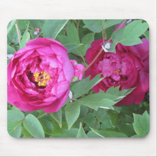 Flor rosada Mousepad del Peony de Fuschia