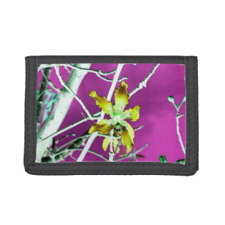 flor rosada negra amarilla de la orquídea