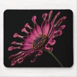 Flor rosada oscura alfombrillas de ratón