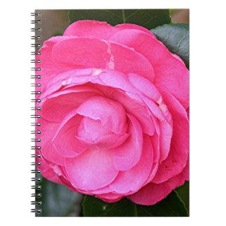 Flor rosada oscura de la camelia en la floración libreta