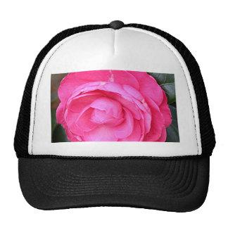 Flor rosada oscura de la camelia en la floración gorras