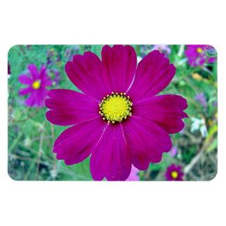 Flor rosada oscura del cosmos iman flexible