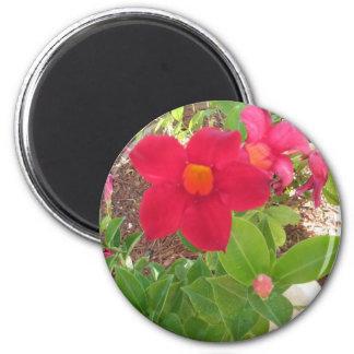 Flor rosada oscura imán redondo 5 cm