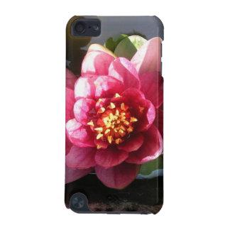 Flor rosada oscura Sunlit del lirio de agua
