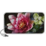 Flor rosada oscura Sunlit del lirio de agua Mp3 Altavoces