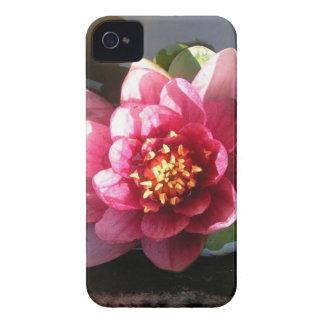 Flor rosada oscura Sunlit del lirio de agua iPhone 4 Case-Mate Fundas