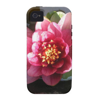 Flor rosada oscura Sunlit del lirio de agua iPhone 4/4S Carcasa