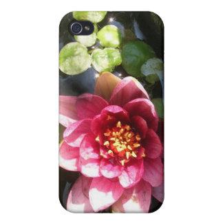 Flor rosada oscura Sunlit del lirio de agua iPhone 4 Coberturas