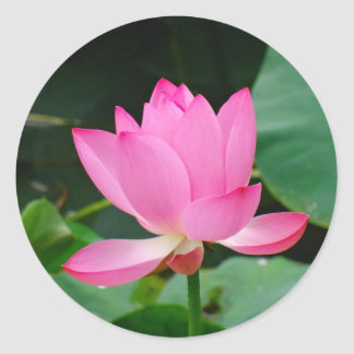 Flor rosada etiqueta redonda