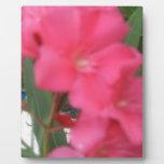 Flor rosada placas con foto