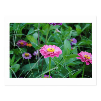 Flor rosada postales