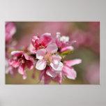Flor rosada posters