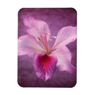 Flor rosada púrpura del árbol de orquídea floral iman rectangular