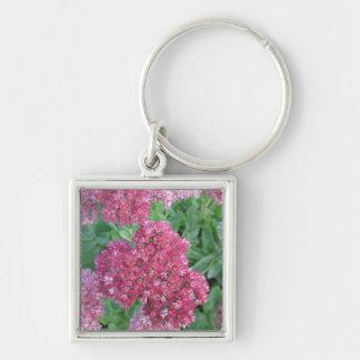 Flor rosada roja del racimo de Sedum de la alegría Llavero Cuadrado Plateado