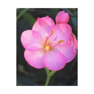 Flor rosada suave lona envuelta para galerías