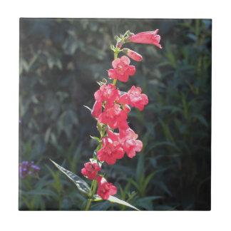 Flor rosada Sunlit del Penstemon Azulejo Cuadrado Pequeño