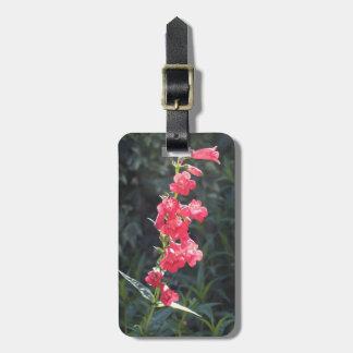Flor rosada Sunlit del Penstemon Etiquetas Bolsa