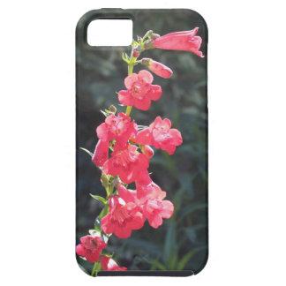Flor rosada Sunlit del Penstemon iPhone 5 Fundas