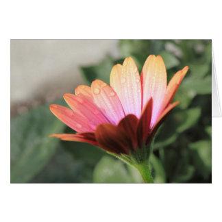 Flor rosada felicitaciones