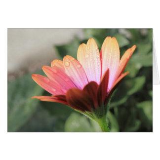 Flor rosada tarjeta pequeña