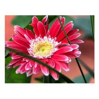 Flor rosada postal