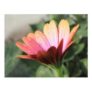 Flor rosada tarjetas postales