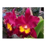 Flor rosada tropical de la orquídea del cattleya postales