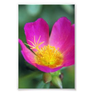 Flor rosada y amarilla fotografías