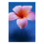 Flor rosada y azul de Hawaii del Frangipani del Pl Posters