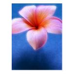 Flor rosada y azul de Hawaii del Frangipani del Pl Tarjetas Postales