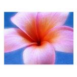 Flor rosada y azul de Hawaii del Frangipani del Pl Tarjeta Postal