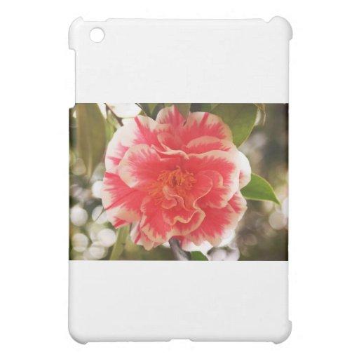 Flor rosada y blanca