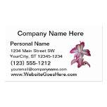 Flor rosada y blanca del cactus, floración suculen tarjetas de visita