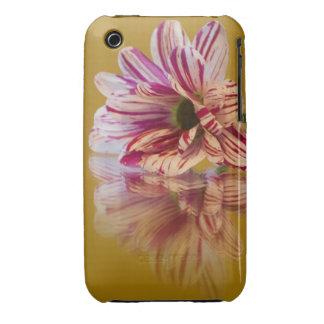 Flor rosada y blanca del Gerbera de Stripey Case-Mate iPhone 3 Protectores