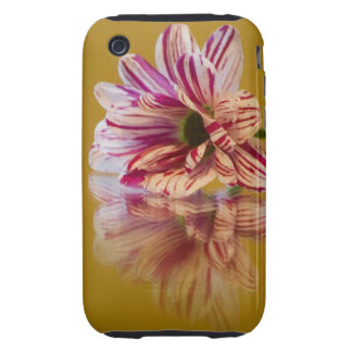 Flor rosada y blanca del Gerbera de Stripey iPhone 3 Tough Protector