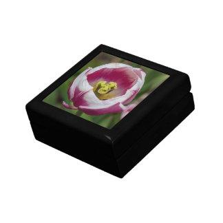Flor rosada y blanca del tulipán cajas de regalo
