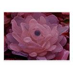 Flor rosada y púrpura del vidrio del mar postal