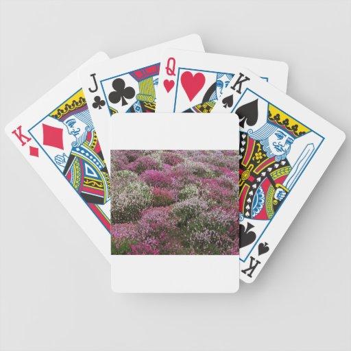 Flor rosado, blanco y púrpura de los arbustos baraja